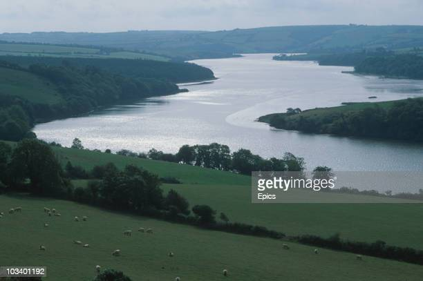 A general view of the river Bandon and sheep grazing in the surrounding countryside Bandon Valley County Cork circa 1995