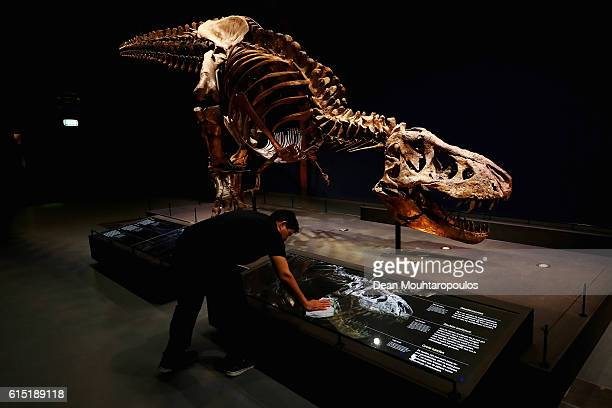 A general view of the skull jaw tail rib cage and teeth of Trix the female TRex exhibition at the Naturalis or Natural History Museum of Leiden on...