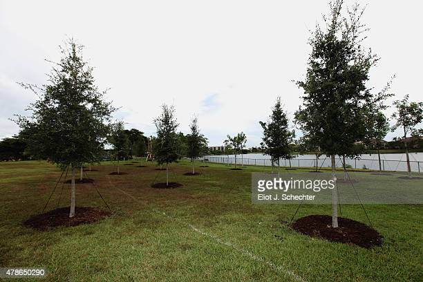 A general view of the trees that were planted for the NHL Green Legacy Tree Project tree planting prior to the 2015 NHL Draft on June 26 2015 in...