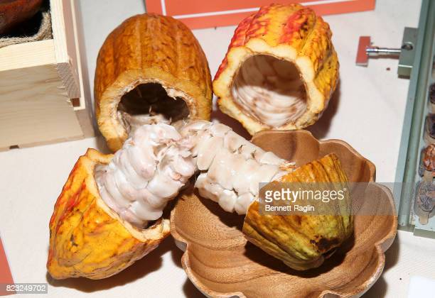 A general view of Theobroma cacao seeds during the 'Dove Chocolate Journey' series screening at The New Museum on July 26 2017 in New York City