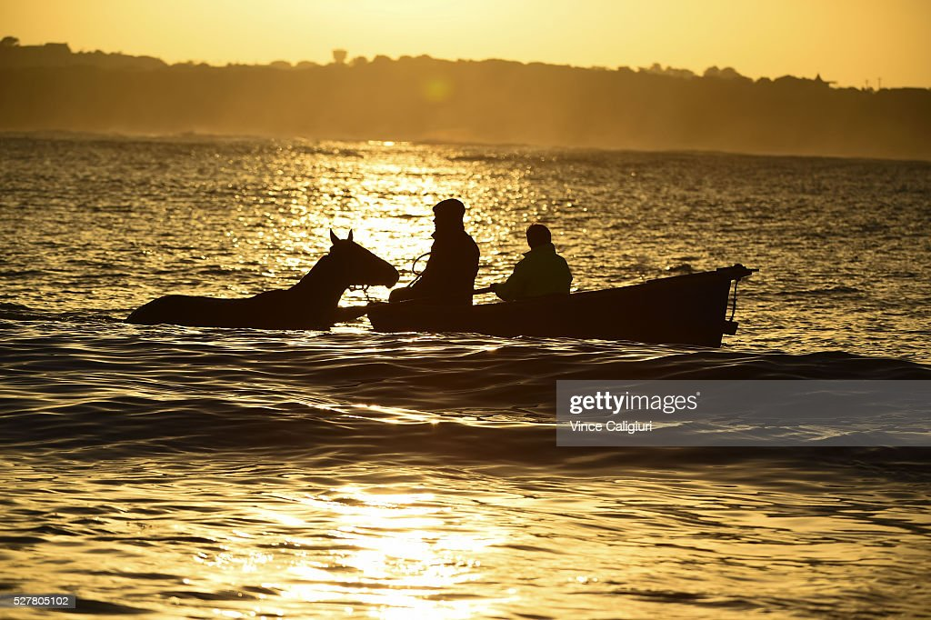 General view of trackwork session at Lady Bay beach as trainers take horses for a swim by boat ahead of day two of the Warrnambool Racing Carnival on May 04, 2016 in Warrnambool, Victoria. Riders gallop the horses up and down the foreshore before cooling the horses in the ocean.