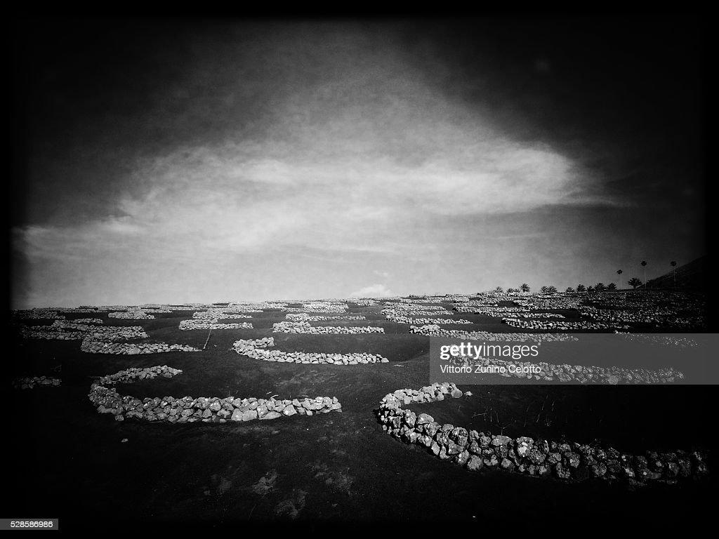 A general view of vineyards at La Geria on April 24, 2016 in Lanzarote, Spain.