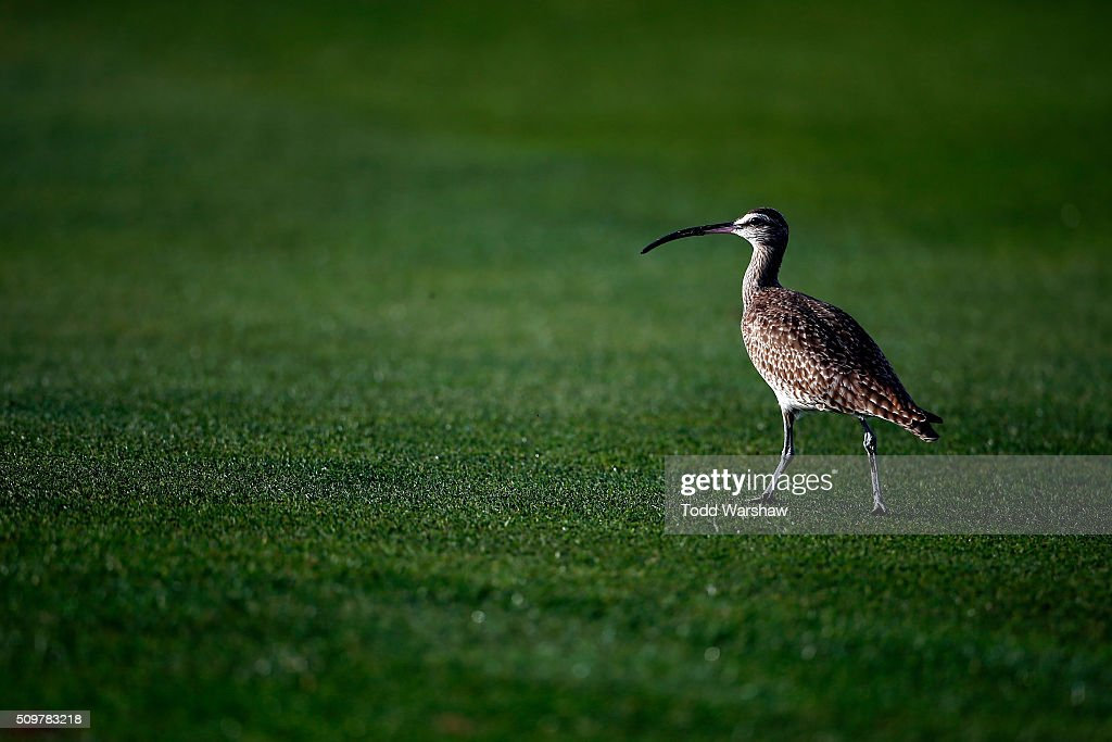 A general view of wildlife along a fairway during the second round of the AT&T Pebble Beach National Pro-Am at the Pebble Beach Golf Links on February 12, 2016 in Pebble Beach, California.
