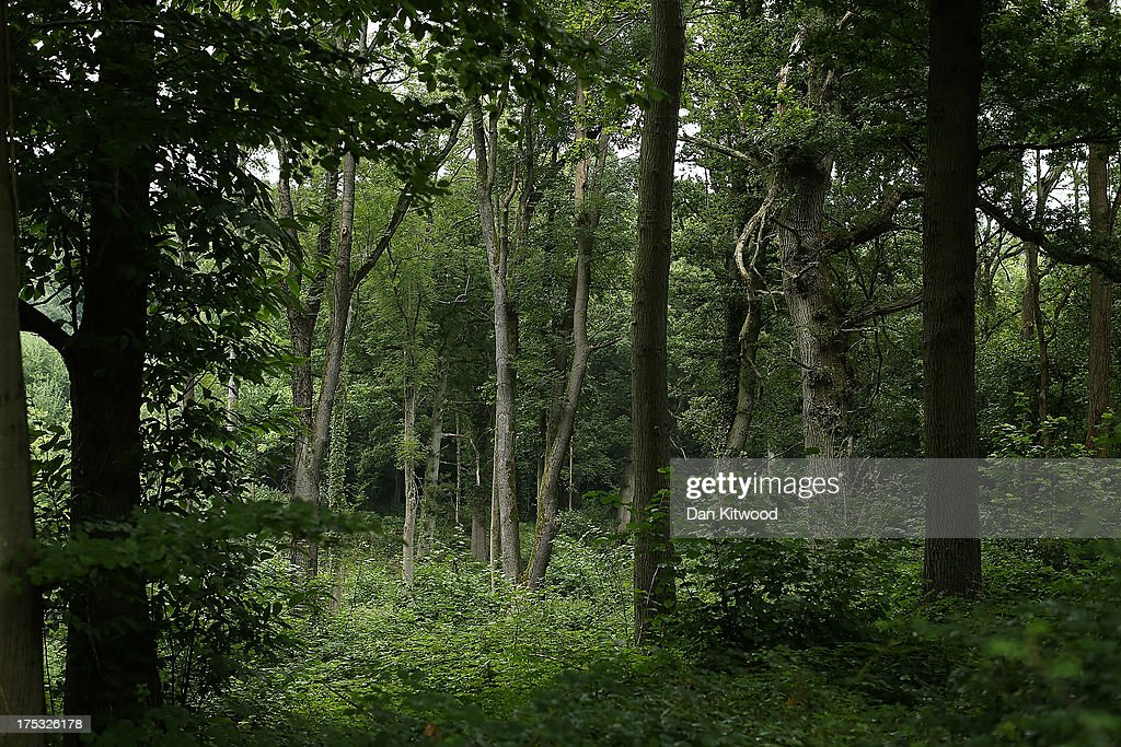 A general view of woodland surrounding the site operated by Cuadrilla Resources Ltd on August 2 2013 in Crawley West Sussex Protesters continue to...