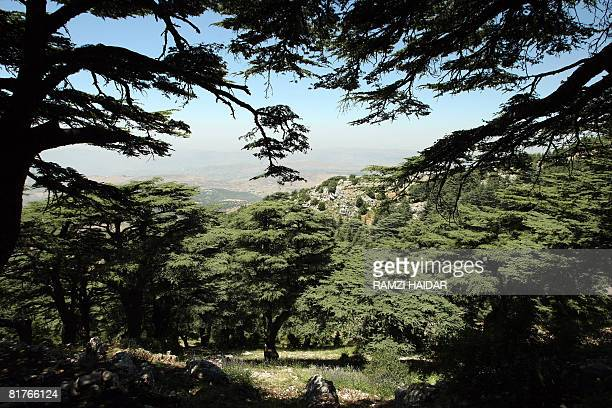 ZABLIT A general view shows the cedar forest in the natural reserve of Baruk in the Shouf mountains southeast of Beirut on June 17 2008 A decade ago...