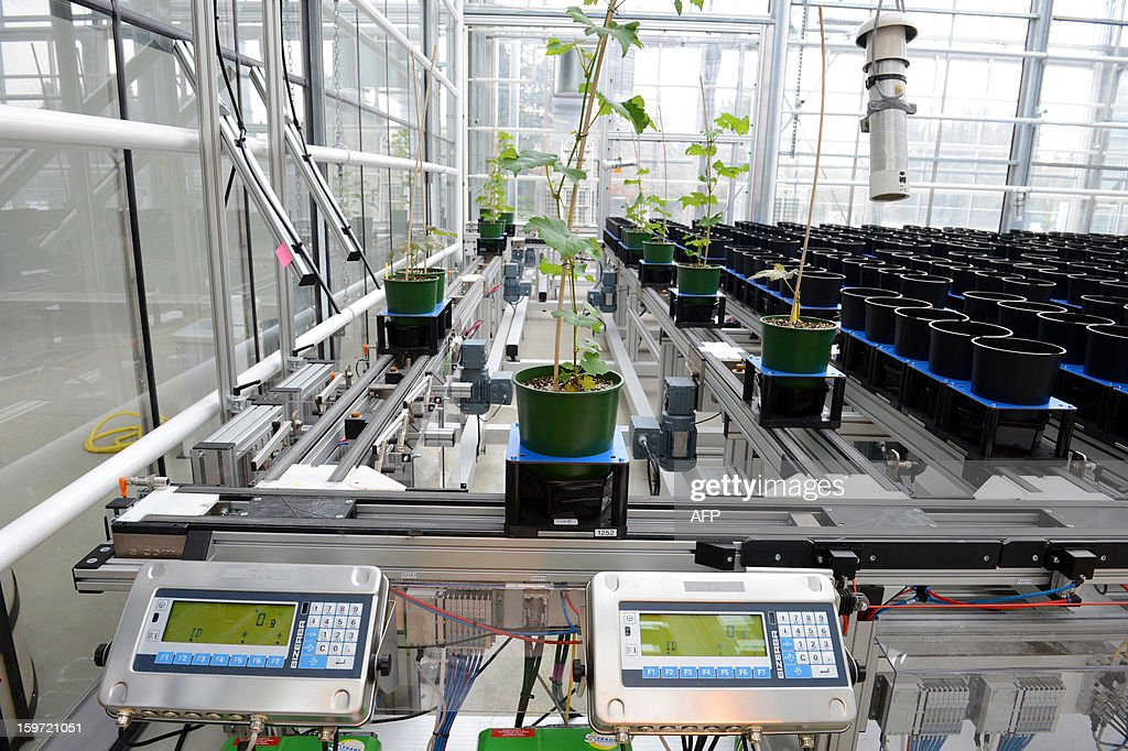 A general view taken on January 18, 2013 shows a new, high-speed phenotype platform (PPHD) at the National Institute of Agronomy Research (INRA) in the northeastern French city of Dijon. The new plateform in Dijon allows researchers to rapidly analyze plant evolution in relation with their environment to identify the most efficient genes to save water and fertilizers. AFP PHOTO/PHILIPPE DESMAZES