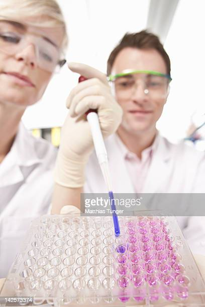 Genetic engineers filling up microtiter plate