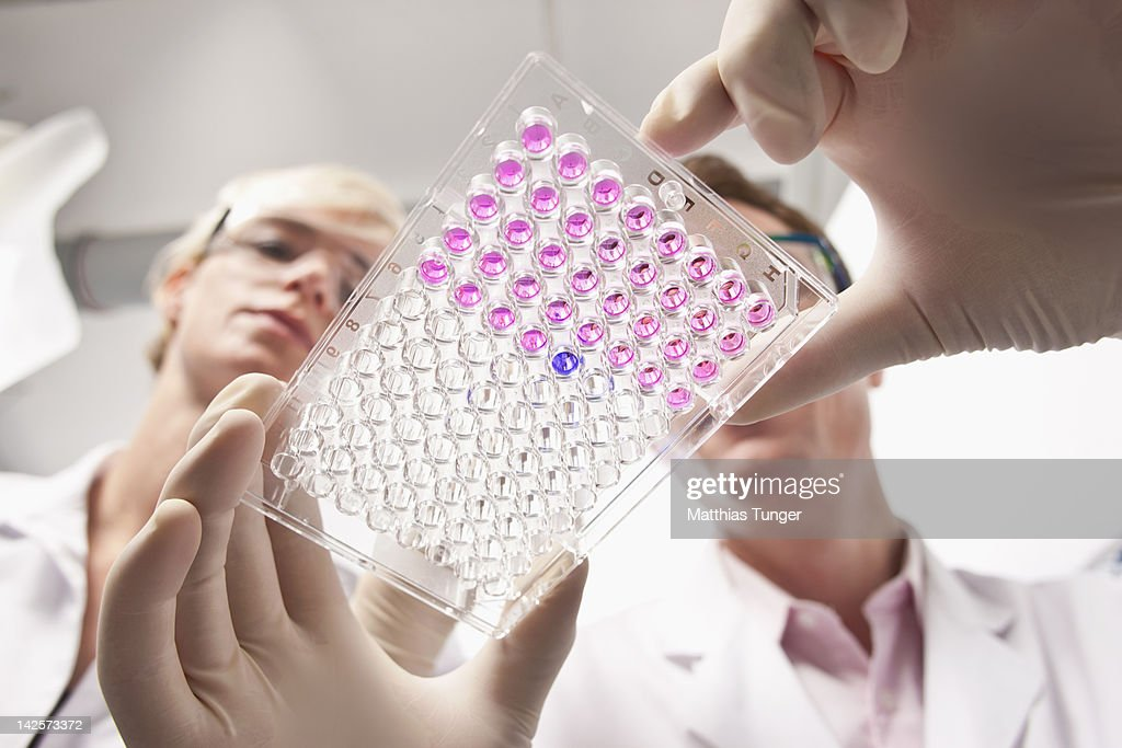 Genetic engineers holding a mocrotiter plate : Stock Photo