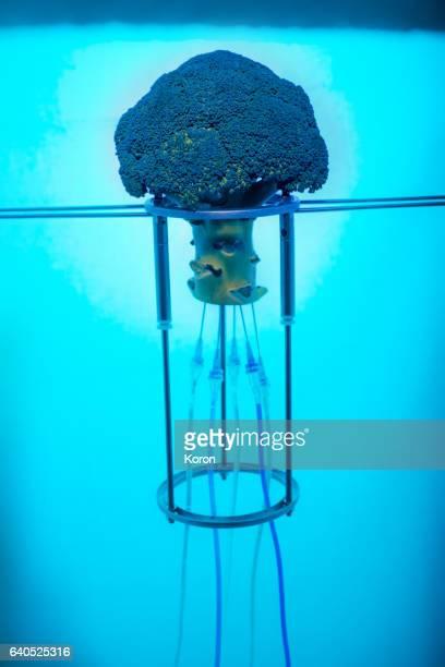 Genetically Modified Jellyfish Broccoli close up