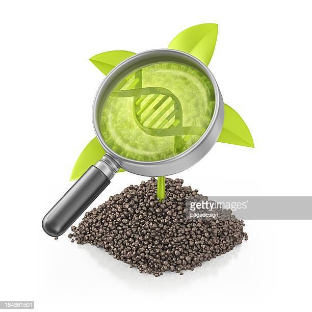 Plante génétiquement modifié