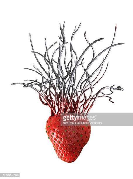 Genetically modified strawberry, artwork