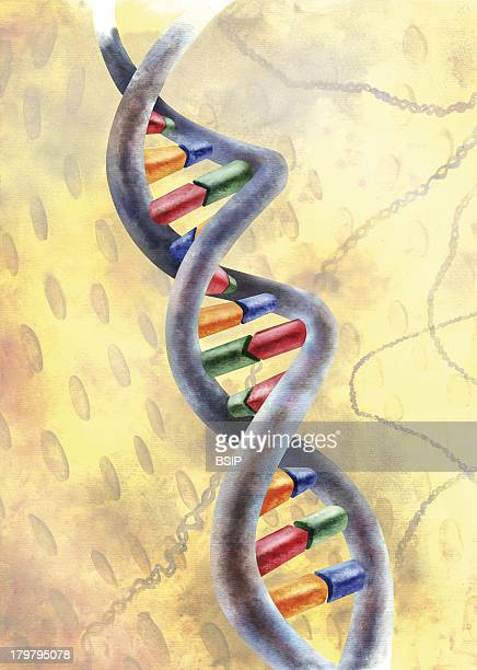 Genetics Dna Dna Molecule In The Nucleus Of A Cell