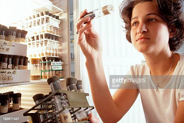 Genetics Research Institut Jacques Monod In Paris France Studying Drosophila For Research On Aging