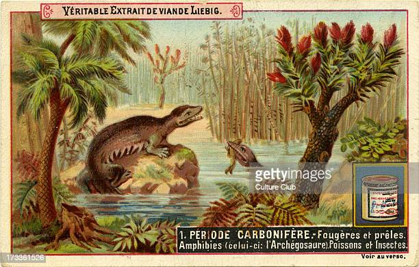 Geological Periods Published 1892 Carboniferous period Translation 'Ferns and horsetails Amphibians fish and insects ' 'Fougères et prêles Amphibies...
