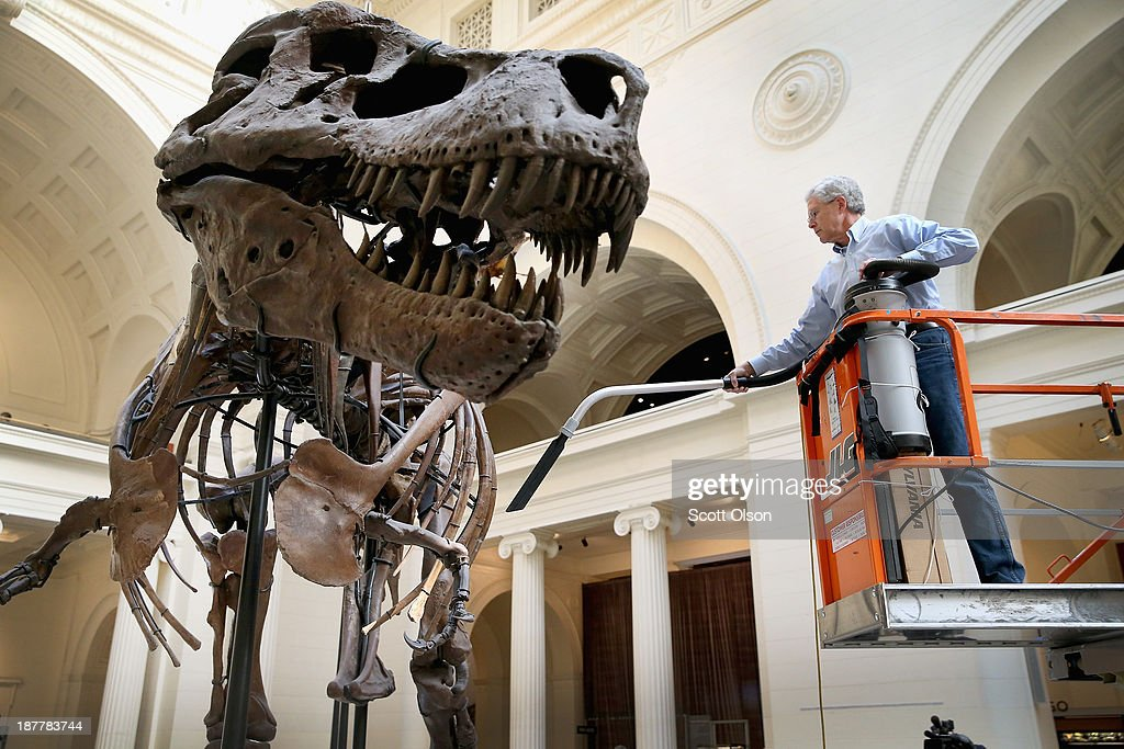 Chicago 39 S Field Museum Cleans Its Preserved T Rex Sue