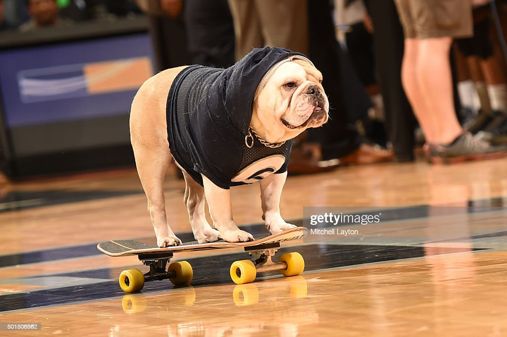Georgetown Hoyas mascot Jack the Bull Dog on a skate during during a college basketball game against the Monmouth Hawks at the Verizon Center on...