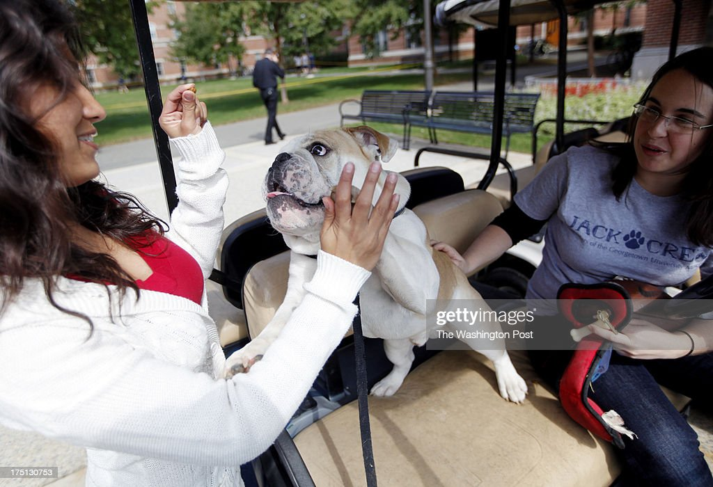 Georgetown University is introducing their new mascot, English bulldog Jack Jr., at Midnight Madness Friday night. Here, Paulina Sosa (left), a senior Arabic and Political Economy major from Texas, and Neve Schadler (right), a sophomore American Studies and Government major from Connecticut, get a high five out of Jack Jr. in exchange for a treat on October 10, 2012. Schadler and Sosa are co-heads of Jack Crew, a group of students in charge of walking both mascots daily.