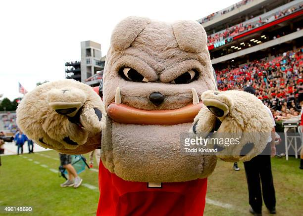 Georgia Bulldogs mascot Hairy Dawg at the conclusion of the game against the Kentucky Wildcats on November 7 2015 at Sanford Stadium in Athens...