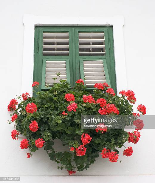 Geranie Blume Window Box