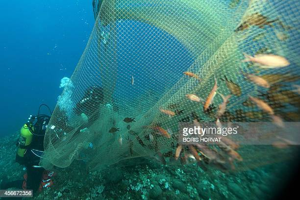 Gerard Carrodano and his assistant check a net for Anthias fish popular within the ornamental fish trade on October 4 off the coast of La Ciotat...