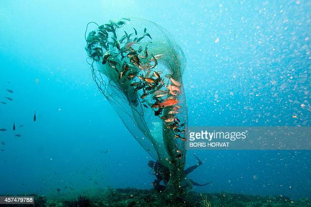 Gerard Carrodano check a net for Anthias fish popular within the ornamental fish trade on October 4 off the coast of La Coitat in southern France...