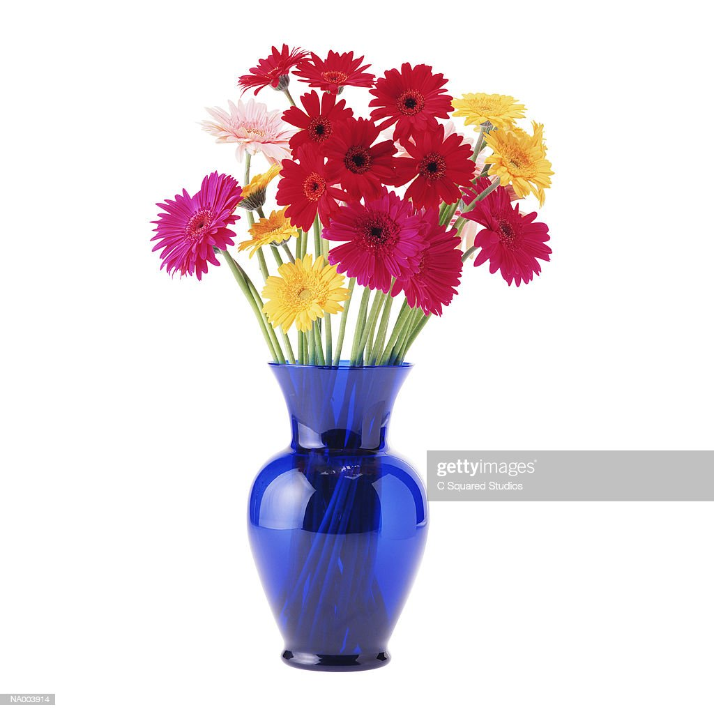 Gerbera Daisies in a Blue Vase : Stock Photo