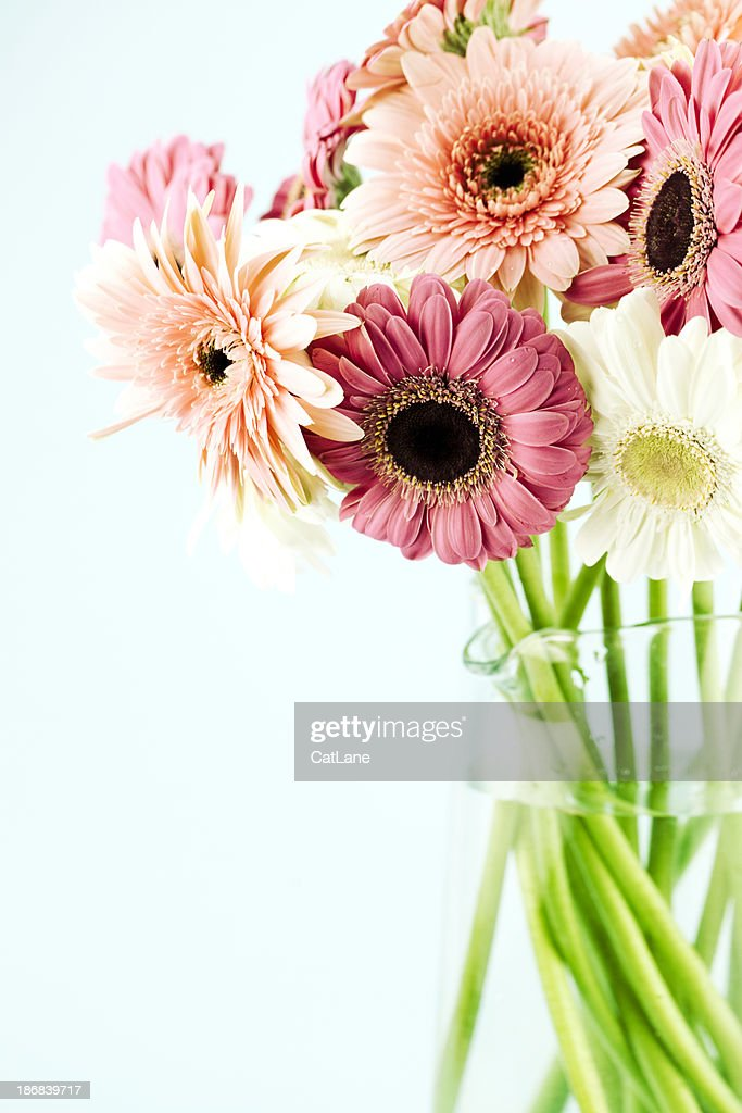Gerbera Daisies in Jar