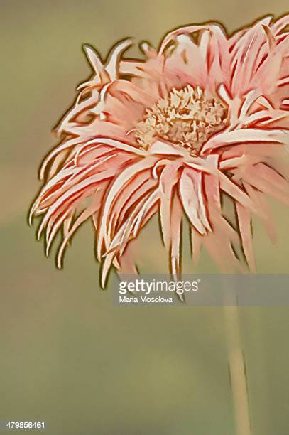Gerbera Daisy Flower Sketch