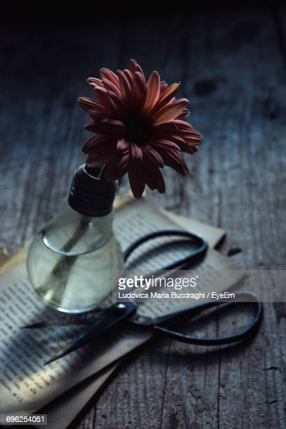 Gerbera Daisy In Light Bulb With Books On Wooden Table
