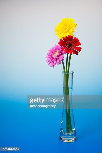 Gerbera Blume : Stock-Foto