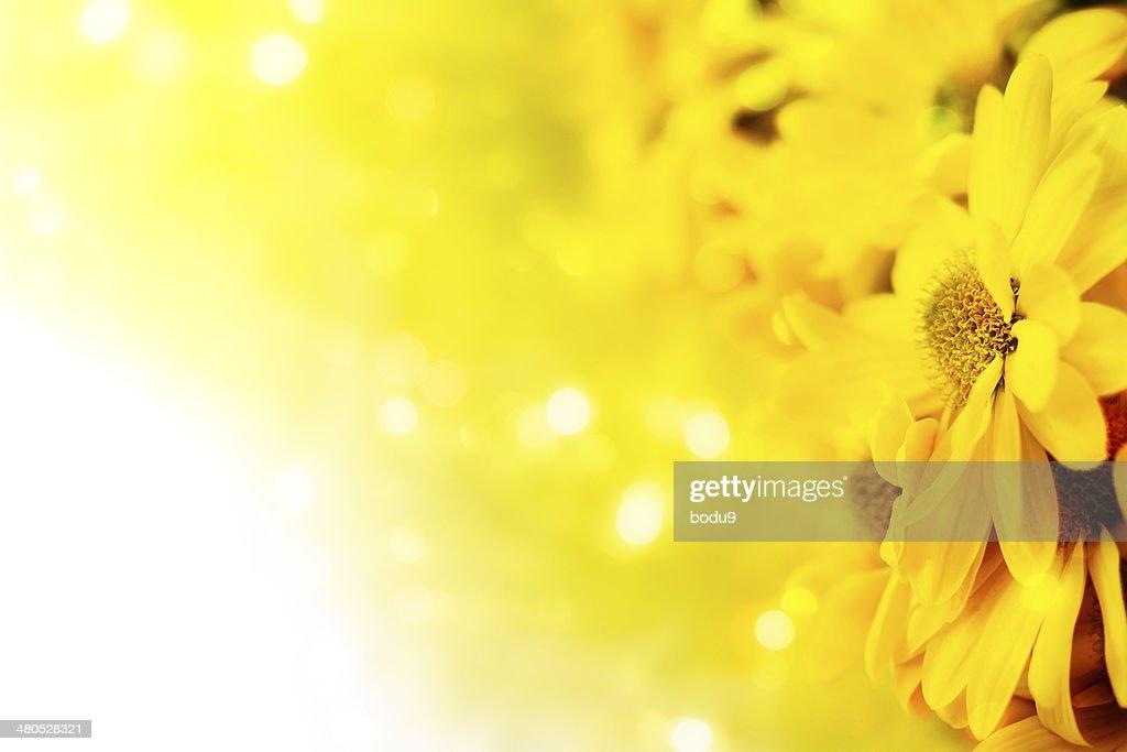 Gerbera in a bouquet : Stock Photo