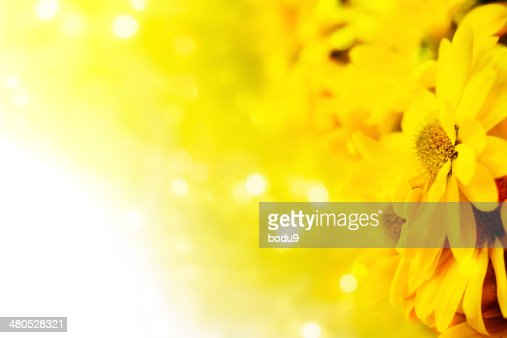 Gerbera in a bouquet : Stock Photo