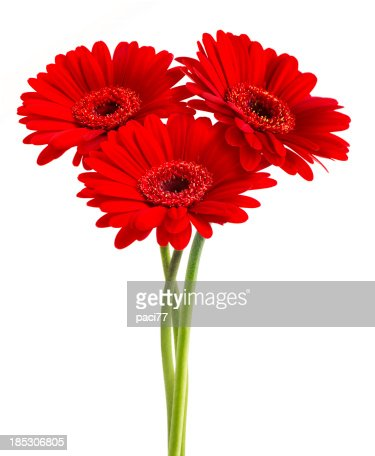 Gerberas (with Clipping Path)