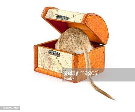 Gerbil in a treasure chest