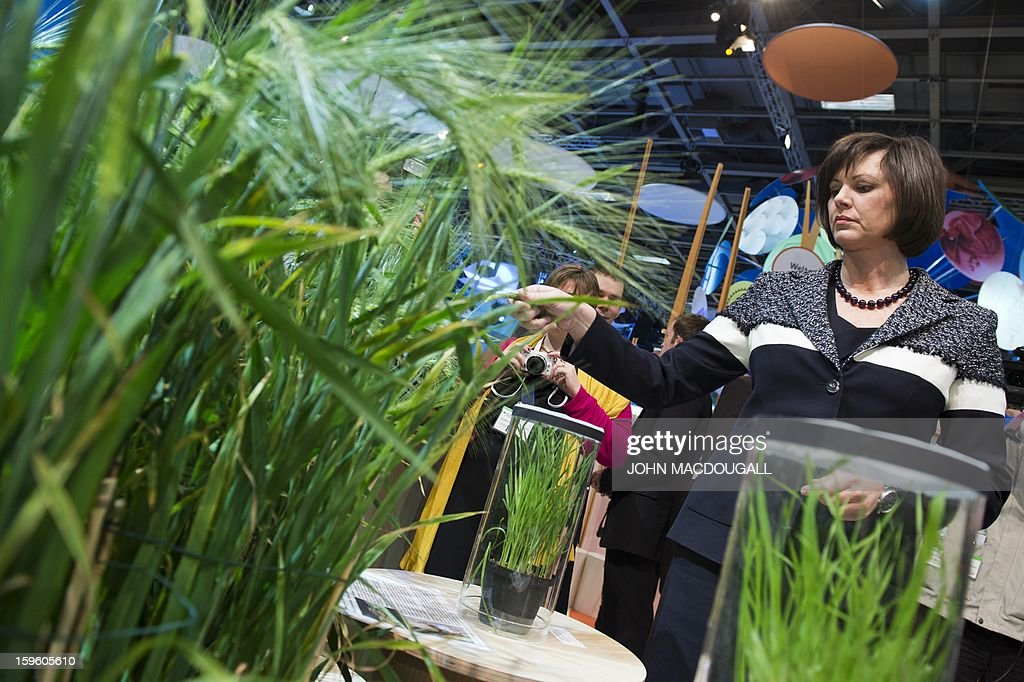 German Agriculture Minister Ilse Aigner stops at a stand promoting the 'Pre-breeding' of crops as she tours the German agriculture ministry's hall at the Gruene Woche (Green Week) Agricultural Fair in Berlin on January 17, 2013. AFP PHOTO / JOHN MACDOUGALL
