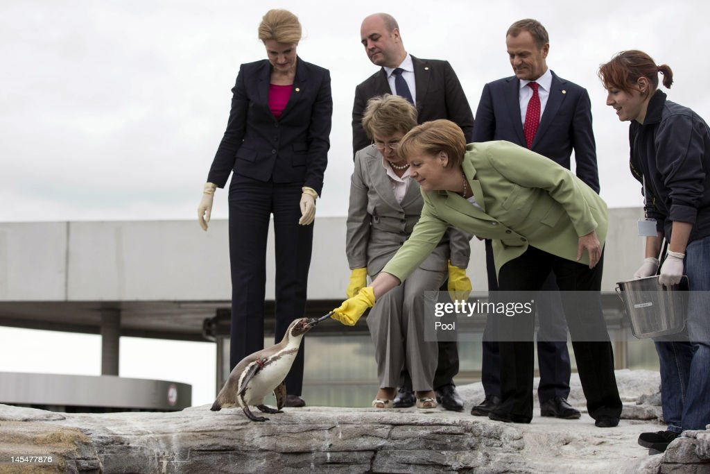 German Chancellor <a gi-track='captionPersonalityLinkClicked' href=/galleries/search?phrase=Angela+Merkel&family=editorial&specificpeople=202161 ng-click='$event.stopPropagation()'>Angela Merkel</a> feeds a penguin on the roof of the Baltic Sea aquarium during the 2012 Council of Baltic Sea States Summit at the Ozeaneum maritime museum on May 30, 2012 in Stralsund, Germany. Leaders of the eleven member states as well as representatives of the European Union are meeting to discuss matters related to energy, the environment and economic development during the two-day summit.