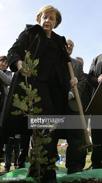 German Chancellor Angela Merkel looks at a tree that she is to plant at the 'Grove of the Nations' gardens in the grounds of the Yad Vashem Holocaust...