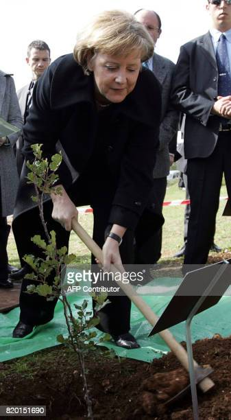German Chancellor Angela Merkel tills the ground to plant a tree at the 'Grove of the Nations' gardens at the Yad Vashem Holocaust museum in...