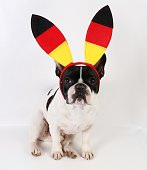 french bulldog with german fan decoration on the head in the studio