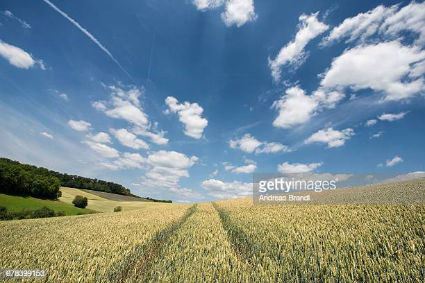 German landscape in summer, Baden-Wurttemberg, Germany, Europe