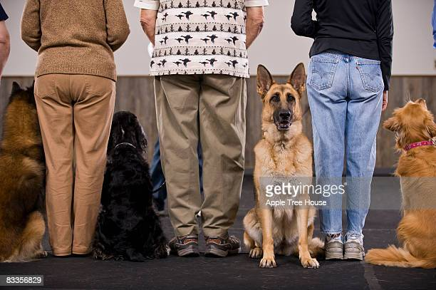 German Shepard standing out from crowd