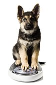 German Shepherd pup on bathroom scale