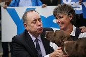 German Short Haired Pointer dogs Dude and Hector meet First Minister Alex Salmond on September 18 2014 in Turriff Scotland After many months of...