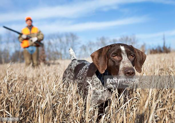 German Wirehair Pointer and man upland bird hunting.