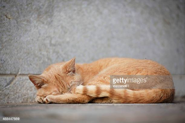 Germany, Baden Wuerttemberg, Cat sleeping on ground