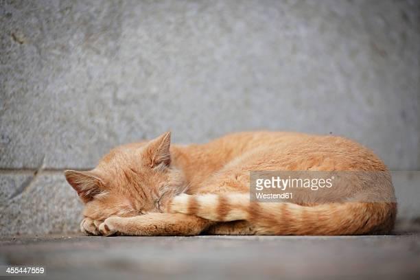 Germany, Baden Wuerttemberg, Cat sleeping on ground