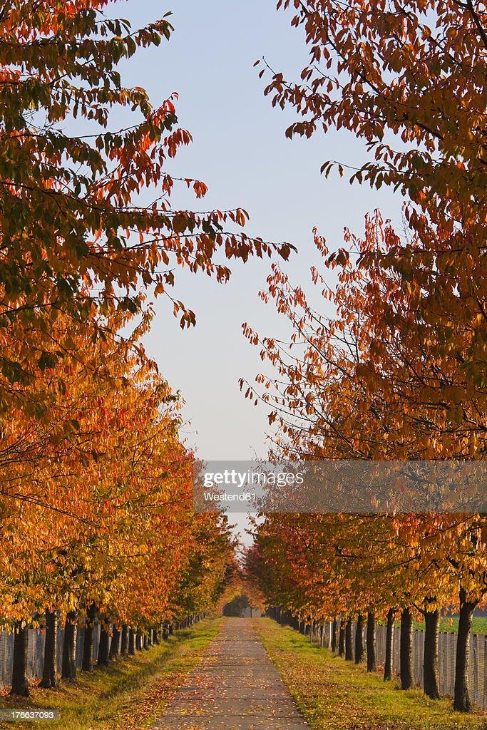 Germany, Baden Wuerttemberg, Stuttgart, Alley with deciduous trees in autumn : Foto de stock