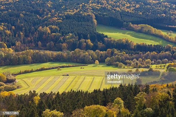 Germany, Baden Wuerttemberg, View of Field near forest near Hechingen