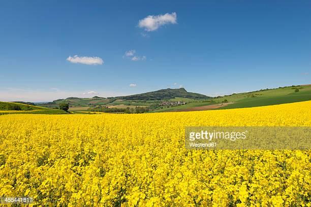 Germany, Baden Wuerttemberg, View of yellow rape field