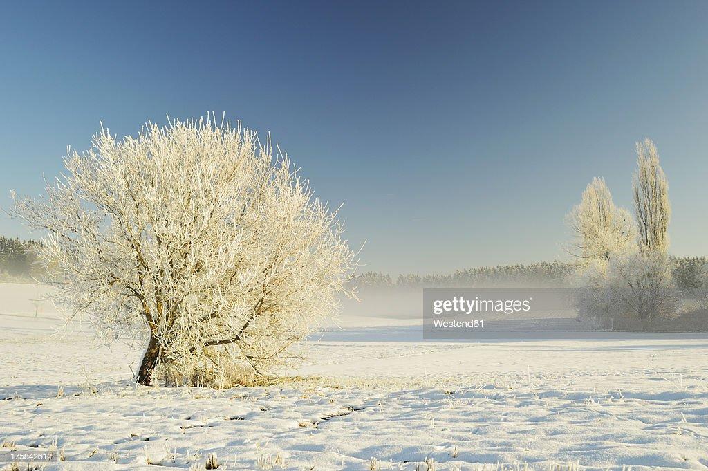 Germany, Baden Wuerttemberg, Villingen Schwenningen, View of rural winter scene : Foto de stock
